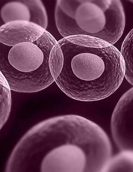 3 Komórki macierzyste 1 1024x768 HISTORIA I WARTOŚCI